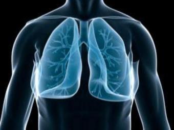 Лёгкие человека в здоровом виде