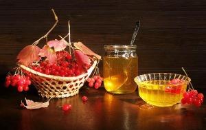 Калина и мед - отличное средство от простуды